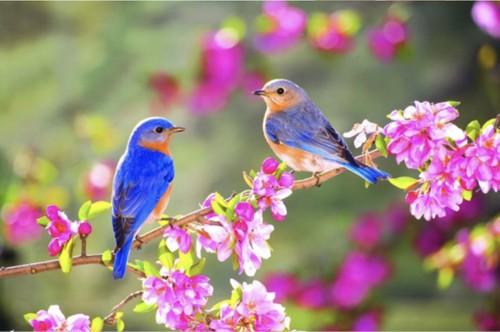 Mùa xuân và những thanh âm của cuộc sống muôn màu - ảnh 1