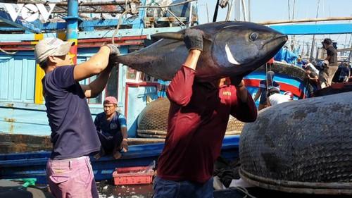 Xuất khẩu cá ngừ tăng mạnh - ảnh 1