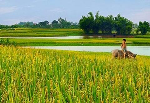 Hát lên Việt Nam - Niềm hãnh diện về quê hương tươi đẹp  - ảnh 1