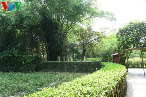 Дом, в котором Президент Хо Ши Мин провел свое отрочество - ảnh 11