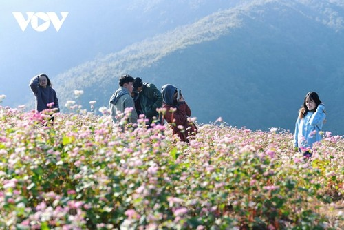 Провинция Хазянг в сезон цветения гречихи - ảnh 14