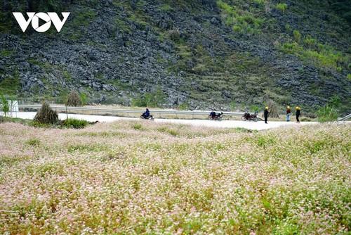 Провинция Хазянг в сезон цветения гречихи - ảnh 2