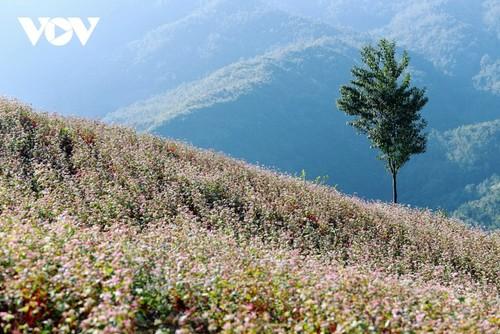 Провинция Хазянг в сезон цветения гречихи - ảnh 4