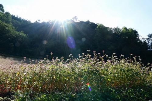Провинция Хазянг в сезон цветения гречихи - ảnh 6