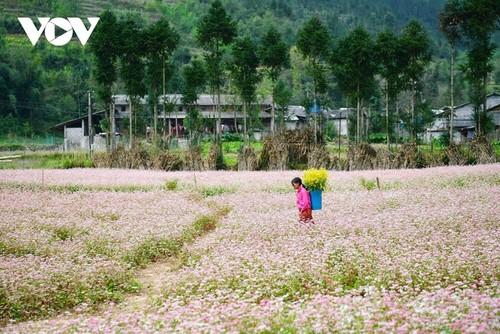 Провинция Хазянг в сезон цветения гречихи - ảnh 7