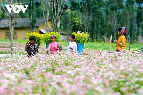 Провинция Хазянг в сезон цветения гречихи - ảnh 9