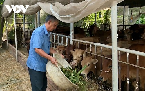 Outstanding farmer in Tra Vinh helps reduce poverty  - ảnh 1