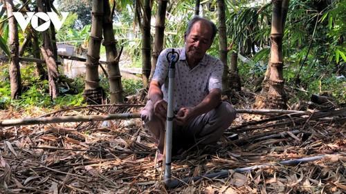 Ca Mau farmer successfully grows bamboo shoots in saline water area - ảnh 1