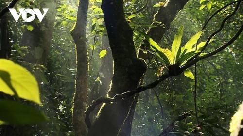 Kon Ha Nung Plateau recognized by UNESCO as Vietnam's new Biosphere Reserve - ảnh 3