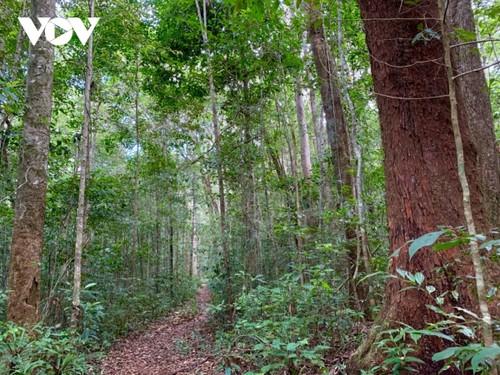 Kon Ha Nung Plateau recognized by UNESCO as Vietnam's new Biosphere Reserve - ảnh 4