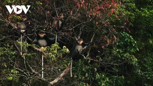 Kon Ha Nung Plateau recognized by UNESCO as Vietnam's new Biosphere Reserve - ảnh 6