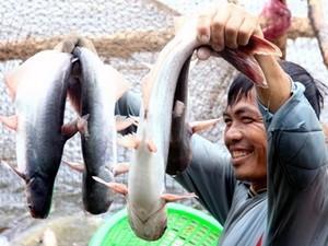 Trao đổi thương mại Việt Nam – Braxin tiếp tục tăng trưởng - ảnh 1