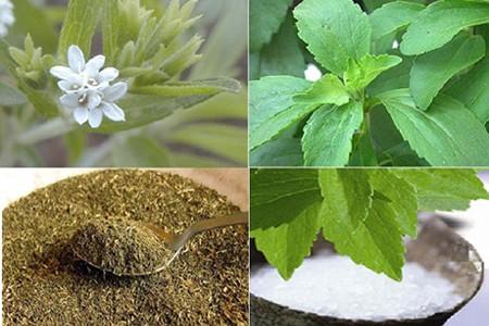 Các loại thuốc đông y hỗ trợ phòng ngừa các bệnh về chuyển hóa - ảnh 1