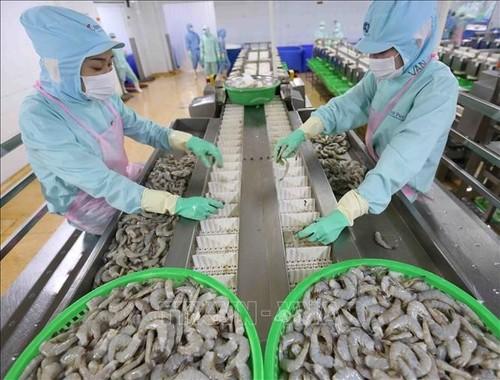 Les États-Unis lèvent l'ordonnance de droit antidumping sur les crevettes du groupe Minh Phu - ảnh 1