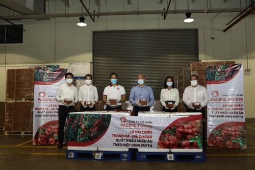 EVFTA: Exportation du premier lot de litchis de Hai Duong à destination de l'UE - ảnh 1