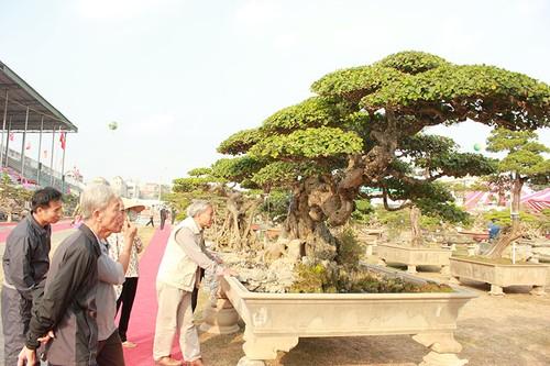 Triển lãm cây cảnh tại Hà Nội thu hút hàng vạn khách tham quan - ảnh 1