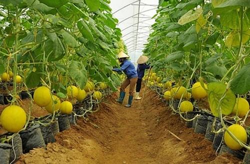 Bình Dương phát triển chuỗi liên kết tiêu thụ sản phẩm nông nghiệp - ảnh 1