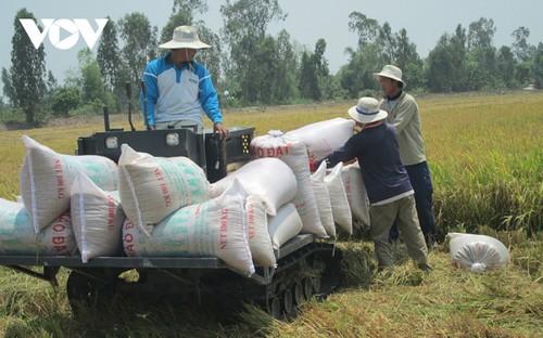Giá gạo Việt Nam xuất khẩu tiếp tục tăng - ảnh 1