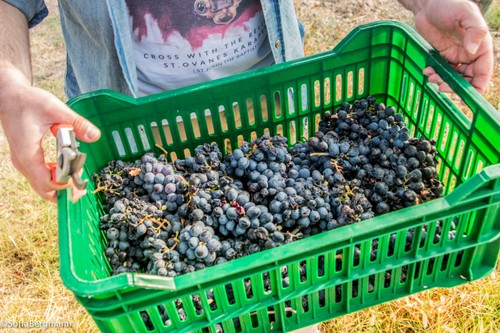 What You Need to Know About Armenian Wine - ảnh 4