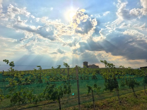 What You Need to Know About Armenian Wine - ảnh 5