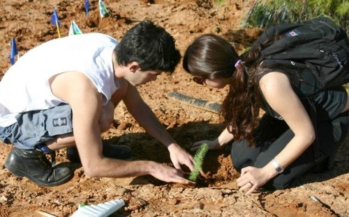 Israel's Tu Bishvat – New Year for the trees - ảnh 3