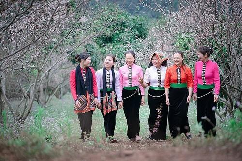 Descubrir la Zona Turística Nacional de Moc Chau - ảnh 2