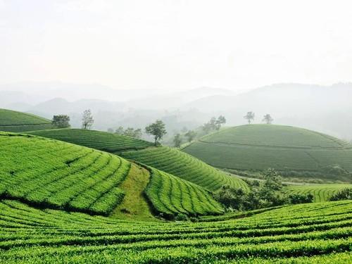 Follow Hanoi Paragliding Club to fly over Long Coc tea hills - ảnh 1