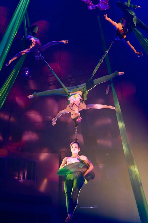 Vietnam's circus takes new direction  - ảnh 3