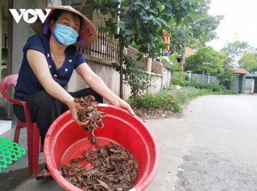 Residents replant Dong Rui mangrove forests - ảnh 2