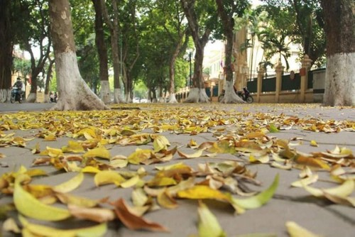 Dracontomelons and lotus – summer specialties in Hanoi - ảnh 1