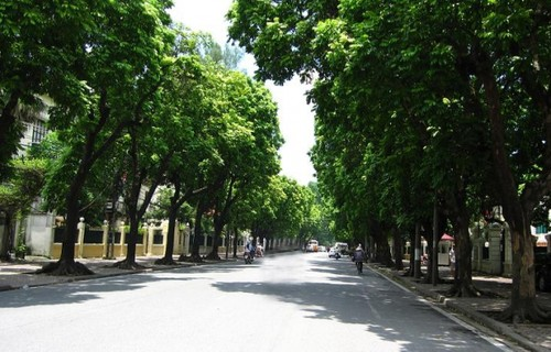 Dracontomelons and lotus – summer specialties in Hanoi - ảnh 2