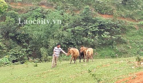 老街省文盘县屯上村瑶族同胞通过开展农业项目脱了贫 - ảnh 1