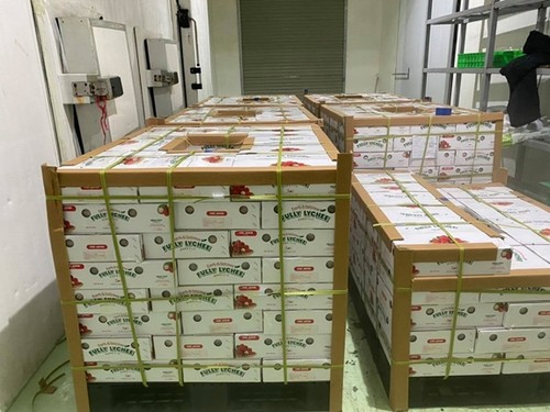 Promueven la exportación de productos agrícolas vietnamitas - ảnh 1
