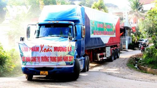 Promueven la exportación de productos agrícolas vietnamitas - ảnh 2