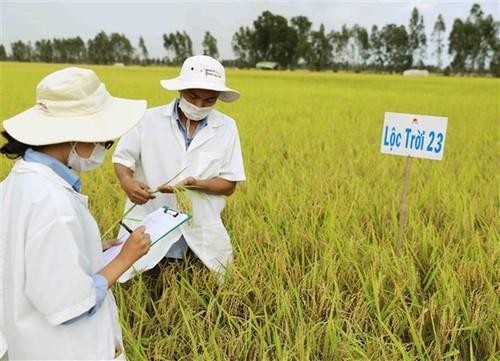 Construcción y desarrollo de marcas comerciales del Delta del río Mekong - ảnh 1