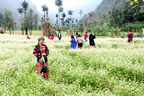 Le 5e festival des fleurs de sarrasin de Hà Giang - ảnh 1