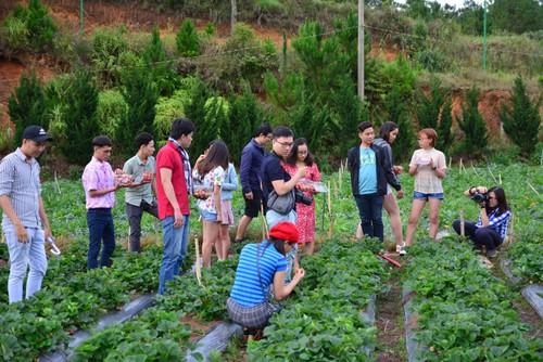 Agrotourisme en plein essor à Dà Lat - ảnh 2