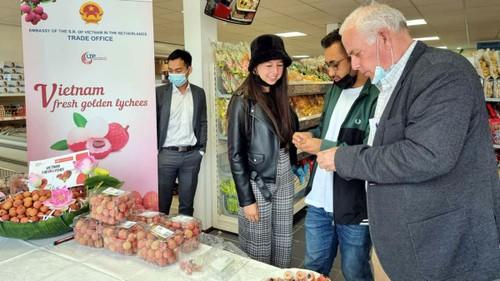 Promouvoir les litchis vietnamiens aux Pays-Bas - ảnh 1