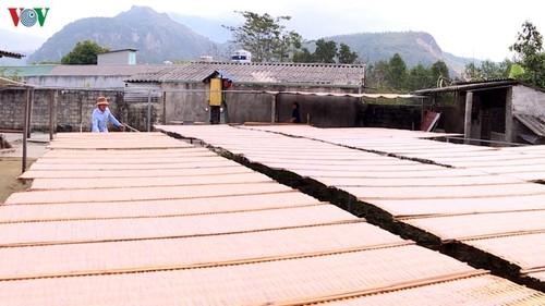 Làng miến dong Bình Lư, Lai Châu – Hiệu quả làng nghề trên miền Tây Bắc - ảnh 1