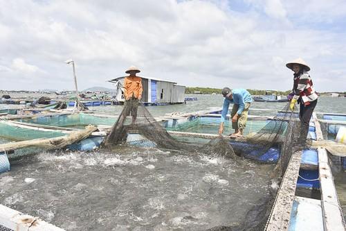Phát triển mô hình nuôi trồng thủy sản trên biển tại Bà Rịa - Vũng Tàu - ảnh 2