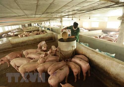 Triển vọng của ngành chăn nuôi Việt Nam rất tích cực - ảnh 1