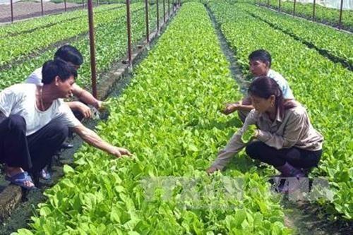 Vietnam por avanzar en la producción agrícola orgánica - ảnh 1