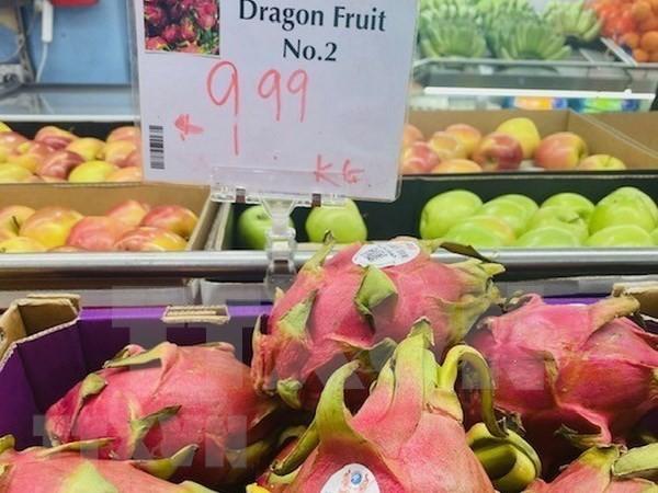 La pitahaya vietnamita conquista el paladar de consumidores australianos - ảnh 1