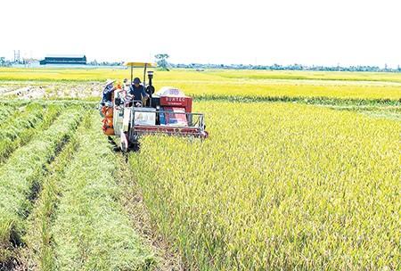 El desarrollo agrícola en la provincia norvietnamita de Thai Binh - ảnh 1