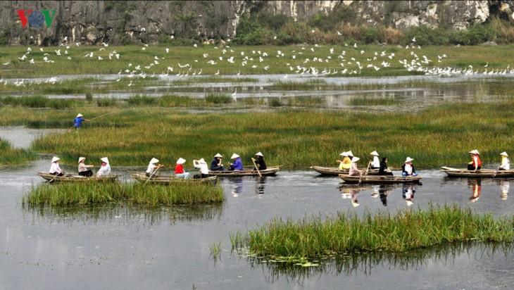 La magnífica belleza de la Reserva Natural de Van Long   - ảnh 5