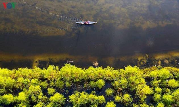 El encanto del pantano de Quang Loi - ảnh 9