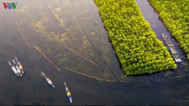 El encanto del pantano de Quang Loi - ảnh 1