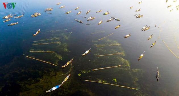 El encanto del pantano de Quang Loi - ảnh 3