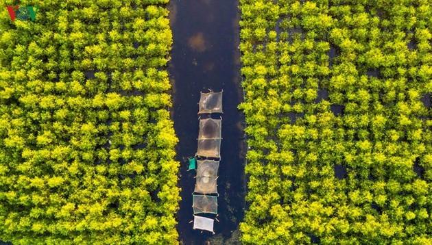 El encanto del pantano de Quang Loi - ảnh 4