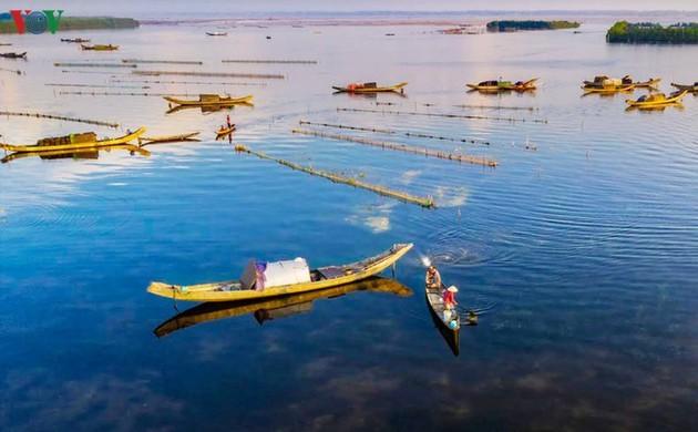El encanto del pantano de Quang Loi - ảnh 5